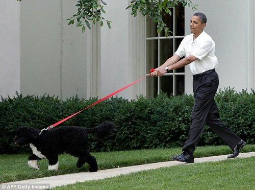 Bo Obam