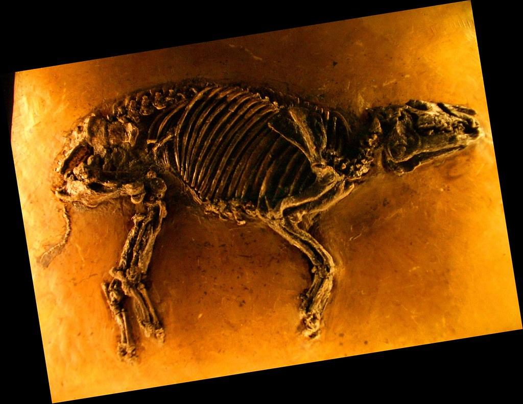 Propalaeotherium