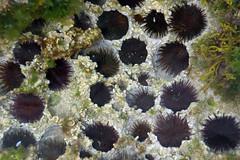 flower(0.0), plant(0.0), coral reef(1.0), sea urchin(1.0), coral(1.0), echinoderm(1.0), marine biology(1.0),
