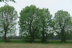 Some nice trees