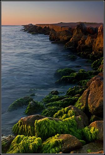 gulfofmexico sunrise moss texas algae portaransas texascoast texassunrise texasphotography yestexas