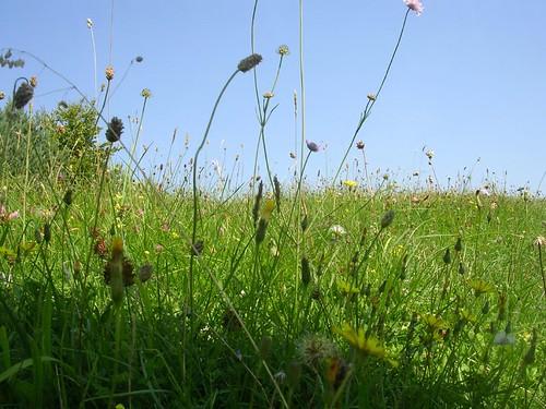 Bug's eye meadow