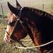 """El caballo del """"Tierno"""" Rodríguez"""