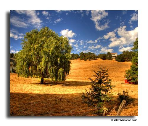 california sky yellow clouds landscape interestingness dry explore 129 suttercreek sfchronicle96hrs diamondclassphotographer