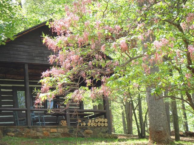 Original CCC built log cabin at Fairy Stone State Park