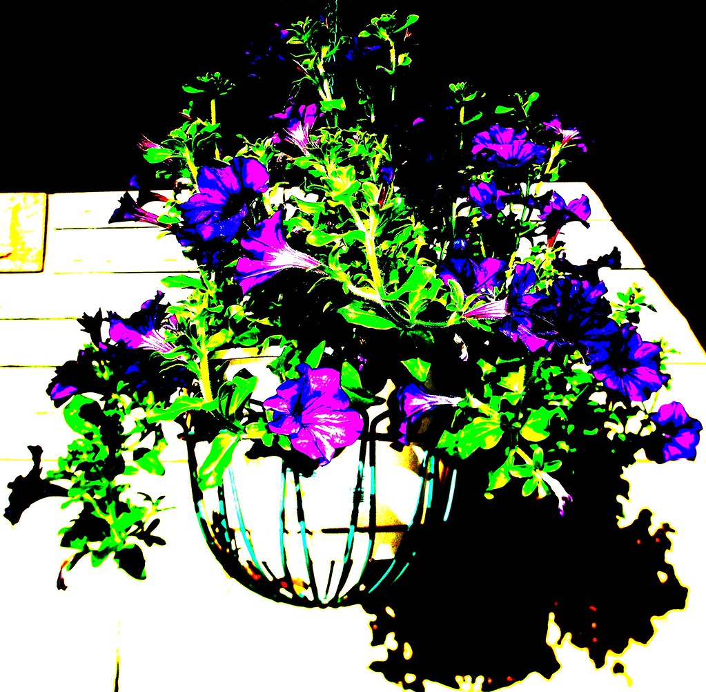 Cheap Hanging Baskets With Flowers : Best flowers for hanging baskets