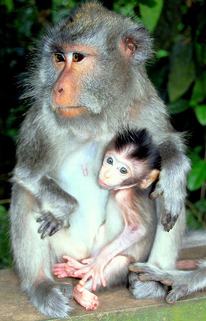 Mom and Baby (Bali)