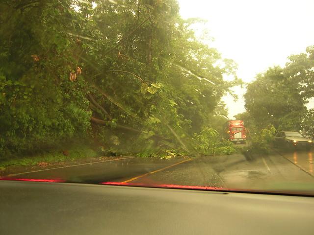 Zunil: Arbol caído en la carretera