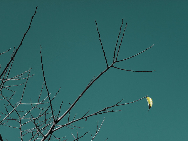 La última hoja del Otoño | Flickr - Photo Sharing!