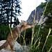Breakfast at Yosemite