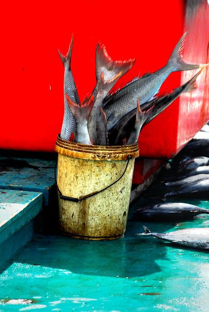 Bucket of fish flickr photo sharing for Bucket of fish