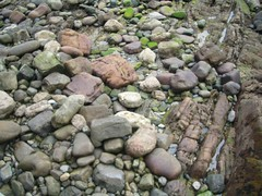 stream(0.0), stone wall(0.0), wall(0.0), body of water(0.0), watercourse(0.0), pond(0.0), boulder(1.0), bedrock(1.0), stream bed(1.0), rock(1.0),