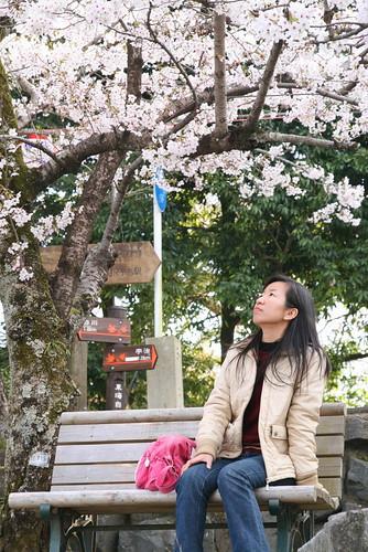1-17櫻花實在美