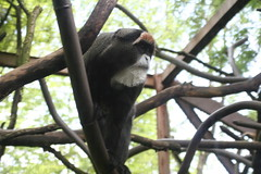 Bearded Monkey!