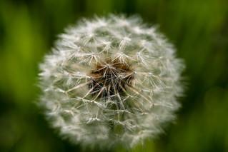 Tratamientos para prevenir alergias