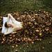 Hibernation. by alexstoddard
