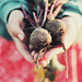 I really do like beets. by Sarah Jane- Lovely Ember Photography