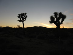 Joshua Tree National Park, California (52)