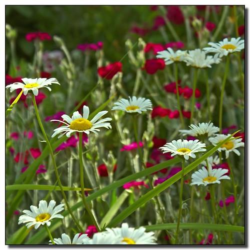flowers colors garden washington olympia soe naturesfinest instantfave