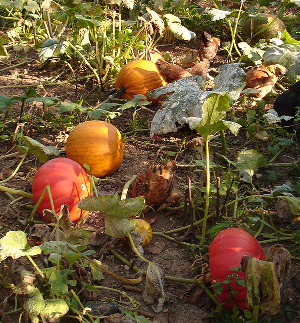 I love the colour of pumpkins