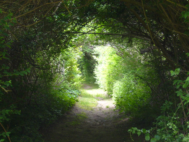 Path, Woods Hole, MA