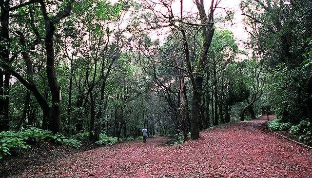 Two Paths .. Matheran