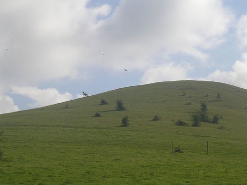 Red Kite over Teletubby Hill