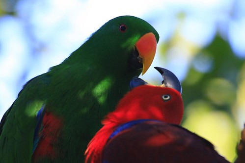 Australian wildlife 0068