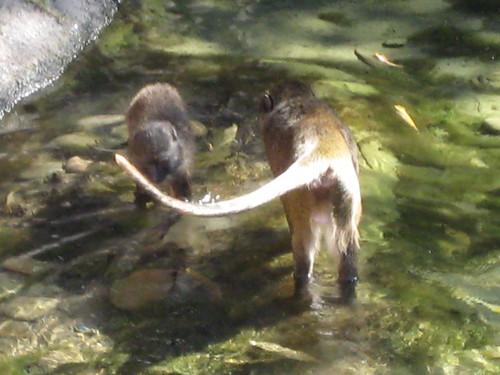 monkeys, simian, mammal, branches, hairy, s… IMG_0559.JPG