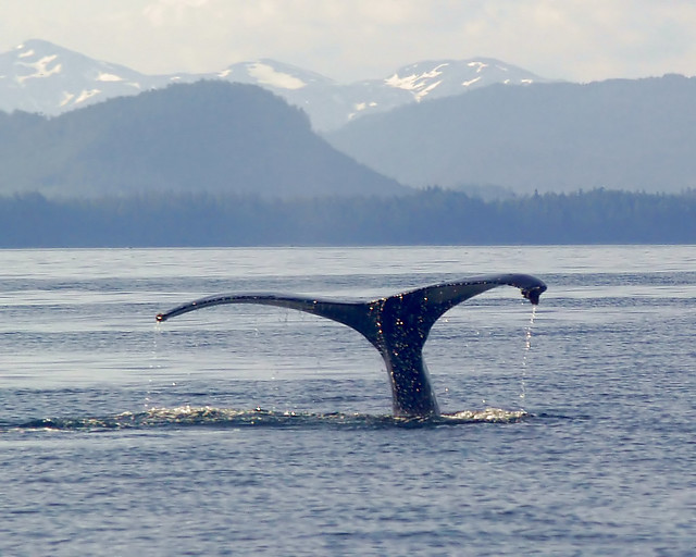 Whale fluke I.