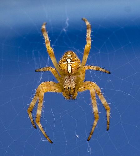 Strange Garden Spider Reptile Forums