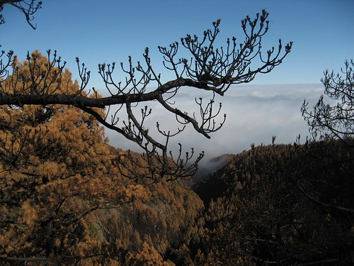 Incendio Tenerife verano 2007 27