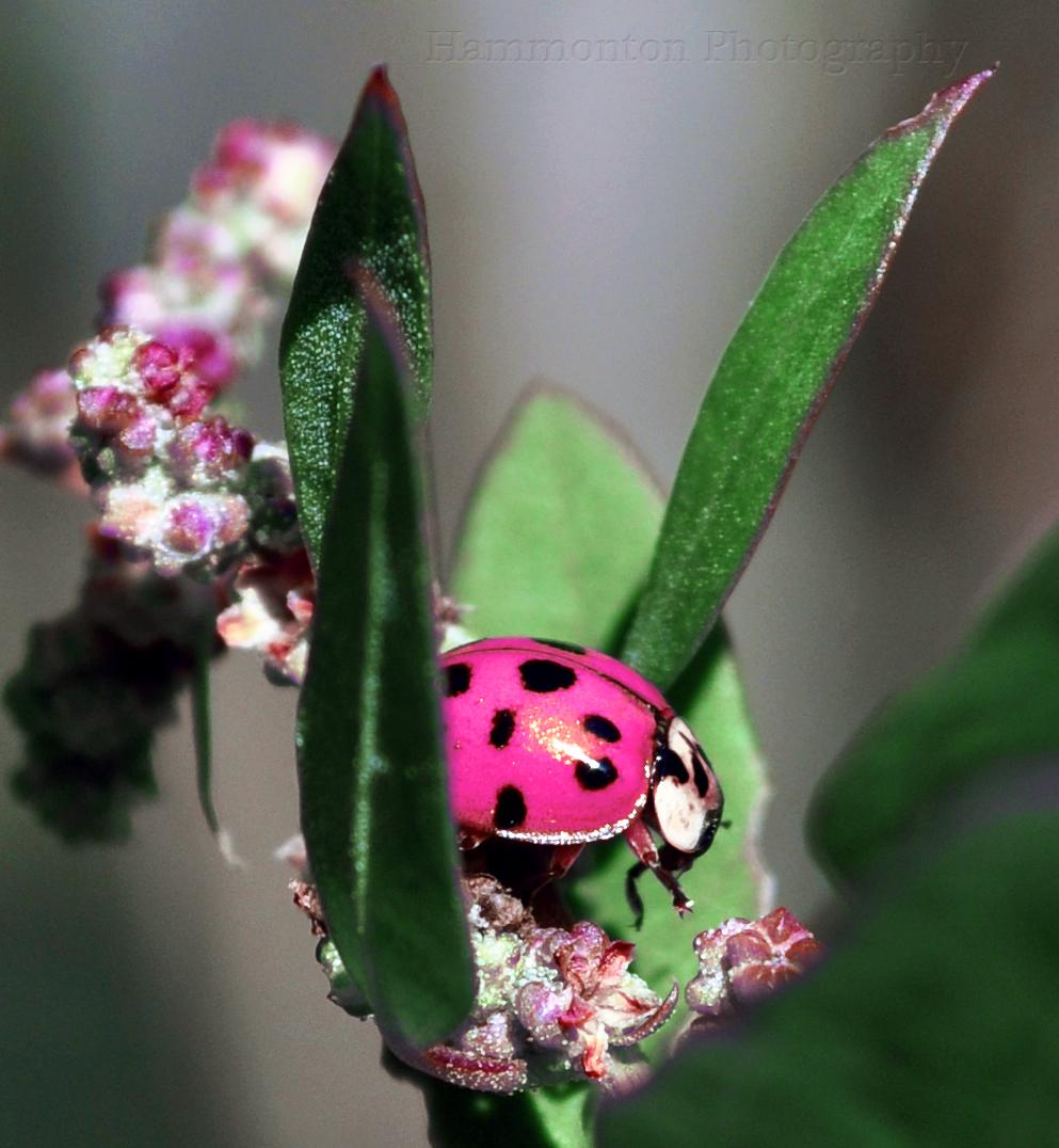 ladybugs u0026 butterflies by john kramer