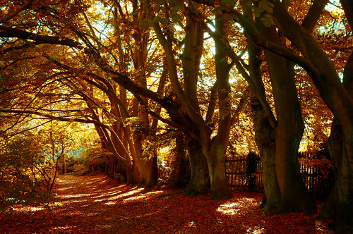 Hampstead Heath, London  Autumn 2010 by ...tooomf