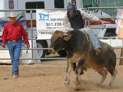 rodeo(0.0), western riding(0.0), mare(0.0), stallion(0.0), equestrian sport(0.0), western pleasure(0.0), pack animal(0.0), fair(0.0), barrel racing(0.0), animal sports(1.0), cattle-like mammal(1.0), sports(1.0), traditional sport(1.0),