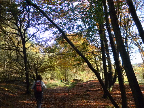 Autumn in Back Wood