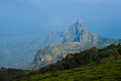 View of Rangaswamy peak from Kodanadu view point, Kotagiri, Tamilnadu