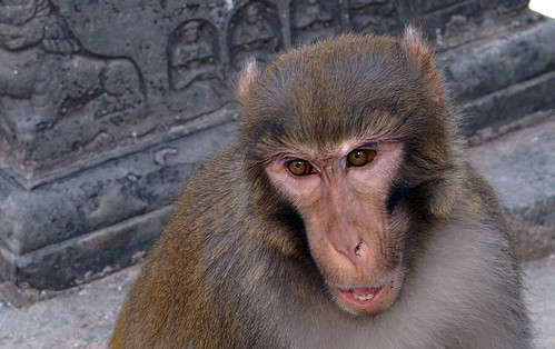 Swayambhunath Monkey Face, Kathmandu, Nepal by Peter Akkermans Fotoakkermans.nl