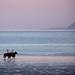 mauve horses by jayPjay