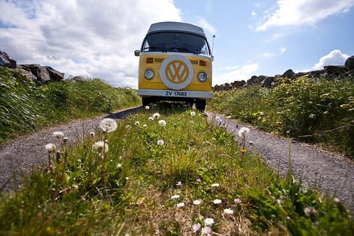 Daisy | Mini Tour of the Burren