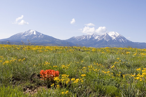 flowers mountains color colorado ef2470mmf28lusm eos5d