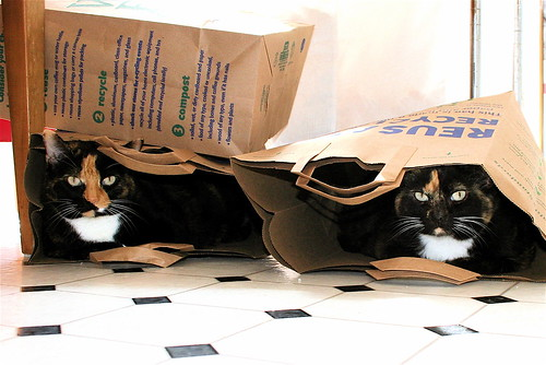 Ana and Ele in Shopping Bags