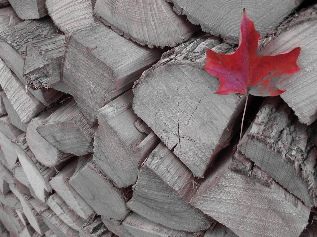 Canada's Autumn