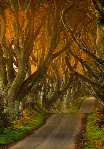 The Dark Hedges II