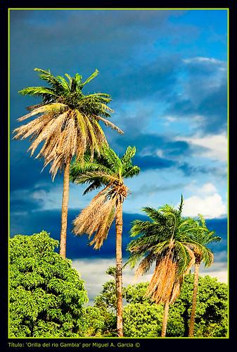africa rio gambia vacaciones 2007 naturesfinest wonderworld wowiekazowie flickrelite onlythebestare kikaytete naturewatcher