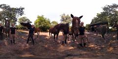 Many horses ..