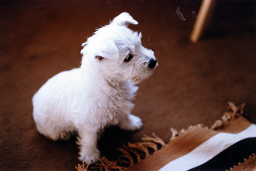 Cassie aged 8 weeks, June 1984