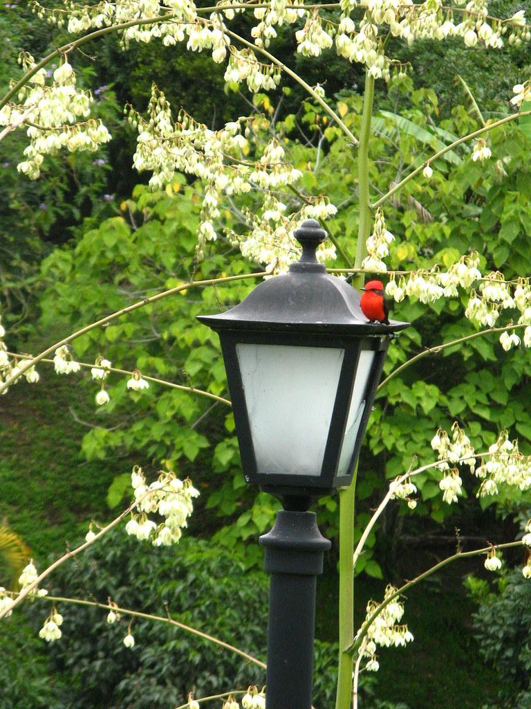 Imagen de un Petirrojo sobre una lampara