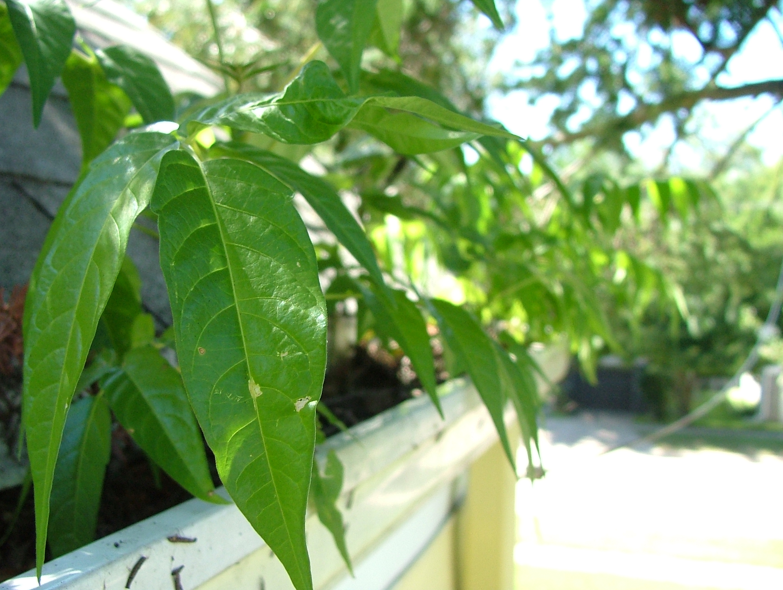 gardening; gutters; rain gutter gardening