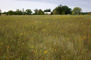 Field Looking Towards Barn and Home
